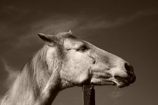 Free Portrait Of Horse Stock Photography - 2032692