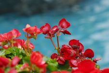 Free Nature Red Flower Royalty Free Stock Images - 2034089
