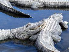 Free Crocodile Royalty Free Stock Photography - 2034247