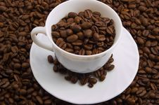 Free Cup With Coffee Beans Stock Photos - 2036643
