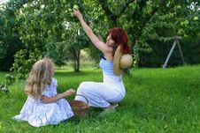 Free Apple Picking Stock Photography - 2038972