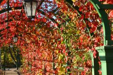 Free Lantern In Autumn Leaves Royalty Free Stock Photos - 2039028