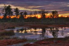 Sunrise On Bogs Stock Photos