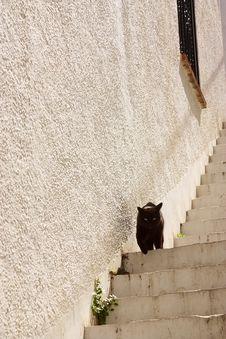 Free Black Cat Royalty Free Stock Photos - 2039258