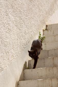 Free Black Cat2 Stock Photos - 2039263