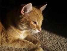 Free Orange Cat Stock Photos - 2039283
