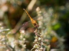 Free Dragon-fly Stock Photography - 2039342