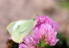 Free The Butterfly On Clover Stock Photography - 2039422