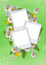 Free Daisy Card Stock Photo - 20304410
