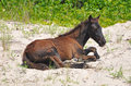 Free Wild Horse Resting On Beach 02 Royalty Free Stock Image - 20309566
