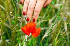 Free Finger With Red Fingernail Touching Royalty Free Stock Images - 20302289