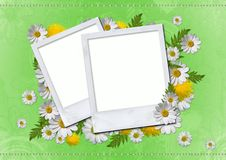Free Daisy Card Stock Image - 20304361