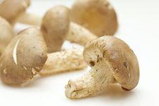 Free Fresh Shiitake Mushroom On White Background Stock Photography - 20305212