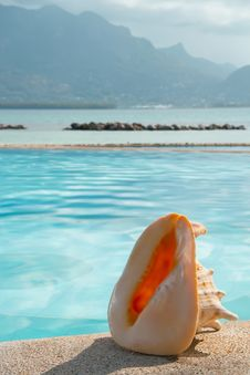 Free Shell By Swimming Pool Side Royalty Free Stock Photos - 20306428