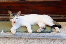 Free White Cat Stock Photos - 20306743