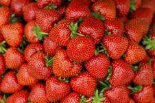 Free Strawberries Royalty Free Stock Photos - 20307328
