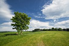 Lonely Tree In The Green Field Stock Image