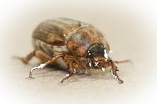 Free Cockchafer And Paint Stock Photos - 20308003