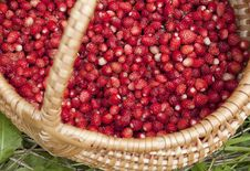Free Wild Strawberries Stock Photos - 20308343