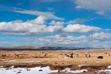 Free Flock Of Sheeps Stock Photos - 20309333