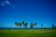 Free Oceanside Palm Trees Royalty Free Stock Photo - 20309595