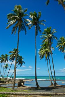 Seaside Palm Trees Under The Sun Royalty Free Stock Photo