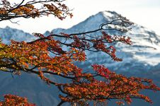 Free Beech Leaves Against The Mountain Stock Photography - 20309752