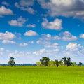 Free Paddy Land Stock Photo - 20310910