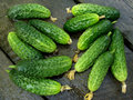 Free Cucumbers Stock Photography - 20315542