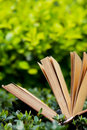 Free Green Leaves And Book Royalty Free Stock Photo - 20315895