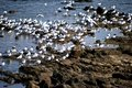 Free Seagull Gathering Royalty Free Stock Photography - 20316657