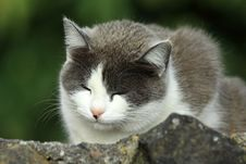 Free Sleeping Cat Royalty Free Stock Photo - 20312635