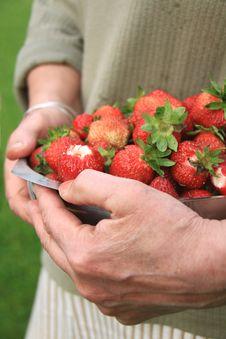 Free Fruit Stock Images - 20313314