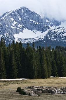 Free Forest And Mountain Royalty Free Stock Photos - 20313758