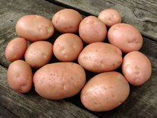 Free Harvested Potato Tubers Royalty Free Stock Image - 20315416