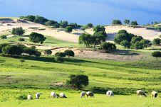 Free Landscape Of The Grassland Stock Image - 20315441