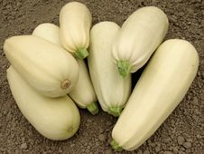Free Marrows Harvest Royalty Free Stock Images - 20315759