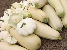 Free Squashes Harvest Stock Photography - 20317102