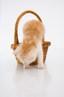 Free Cat In A Basket Stock Photography - 20317632