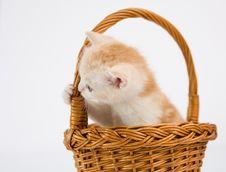Free Cat Stock Photography - 20317652