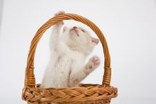 Free Cat Stock Photo - 20317670