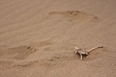 Free Lizard On A Sand Stock Photo - 20318630