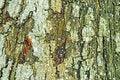 Free Bark Of A Tree Stock Photo - 20321580