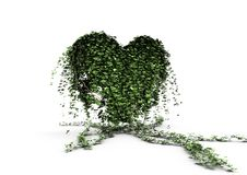 Free Ivy Heart Royalty Free Stock Photography - 20320007