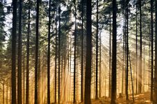 Free Misty Landscape In Forest Royalty Free Stock Images - 20320899
