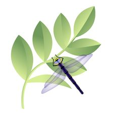 Free Dragonfly On Leaves Royalty Free Stock Photography - 20321007