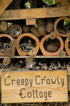 Free Creepy Crawly Cottage Close Up Stock Image - 20321071