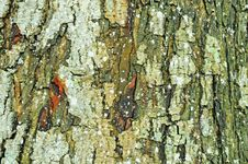 Free Bark Of A Tree Stock Photo - 20321580