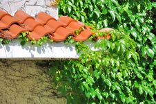 Free Eave Of Architecture And Green Leaves Cover Royalty Free Stock Photo - 20321875