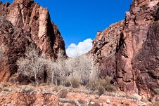Free Grand Canyon- North Rim, Clear Creek Trail Stock Photos - 20322403